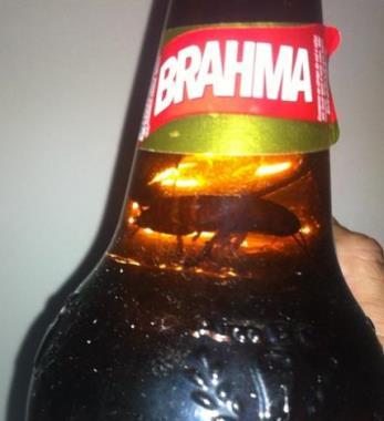 Cerveja apresentando barata no liquido.